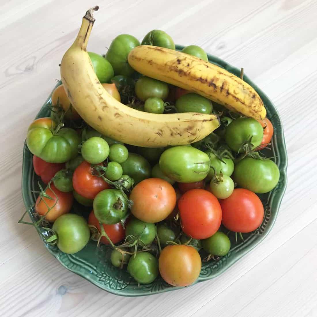 Hur får man gröna tomater röda inomhus.