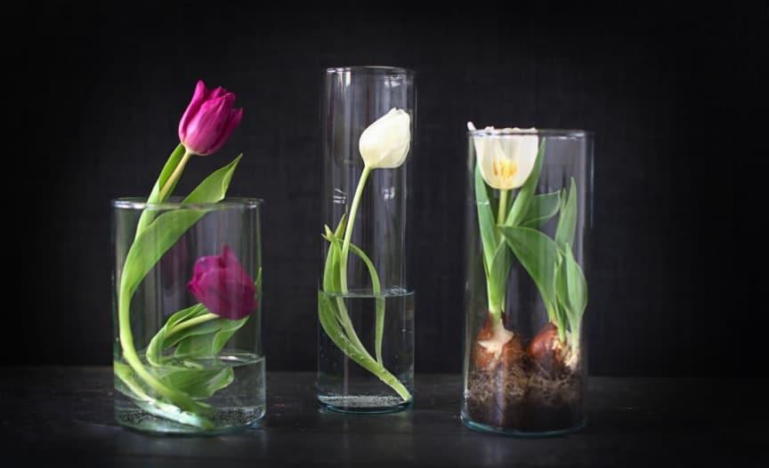 Allt om tulpaner: Tulpaner på fyra olika sätt på tulpanens dag