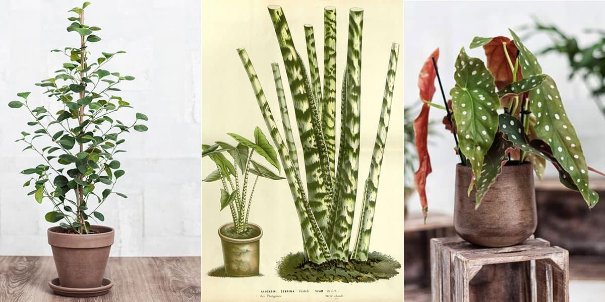 Inredningsvärldens 9 trendigaste växter just nu – Krukväxtpodden listar