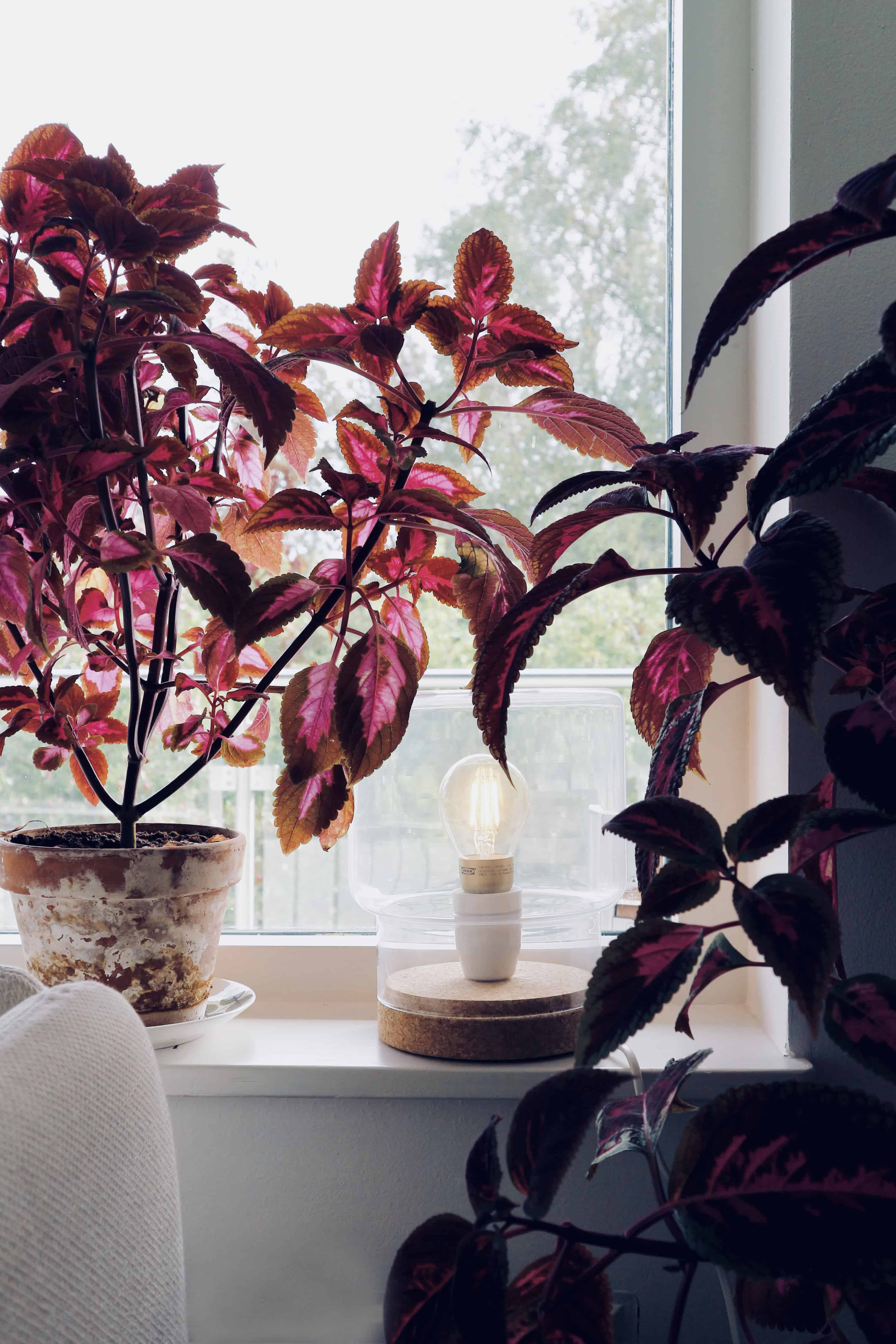 Ikea hack Sinnerlig – lys upp hösten och myset kan börja