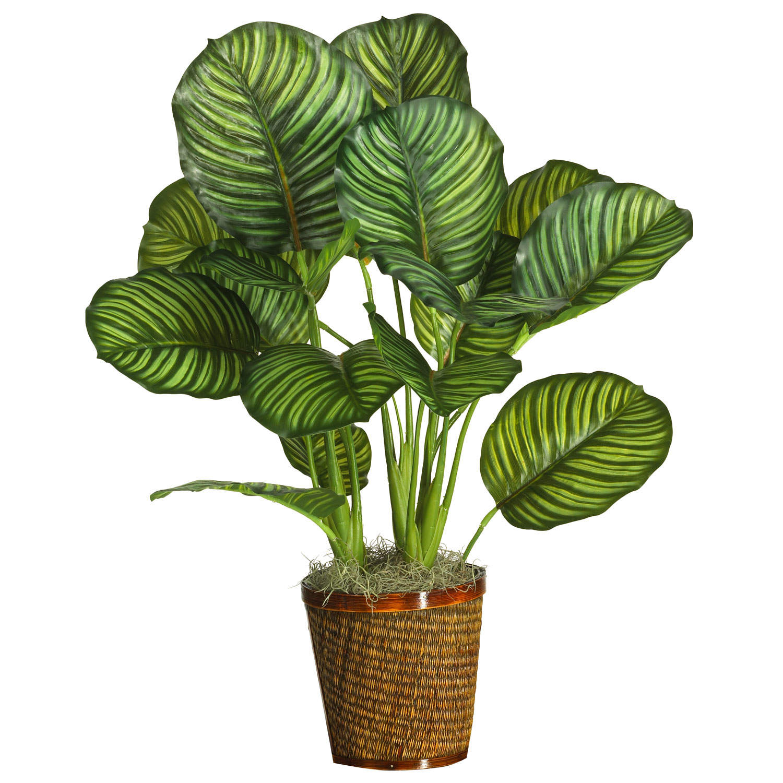 5 växter som inte dör – lättskötta och tåliga krukväxter och blommor för inomhus