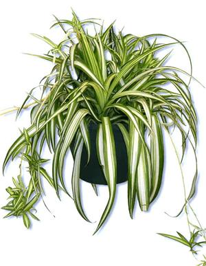 5 växter som inte dör – lättskötta och tåliga krukväxter och blommor för inomhus – som tål mörker.