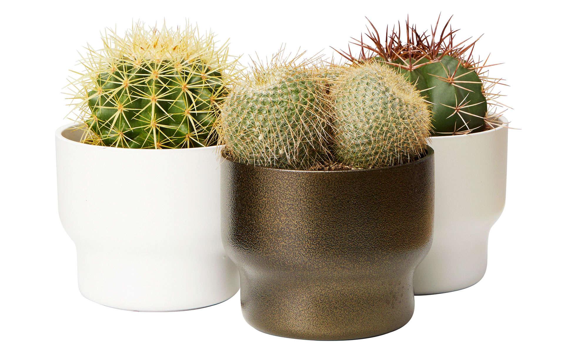 kaktus-hemmafix-plantagen
