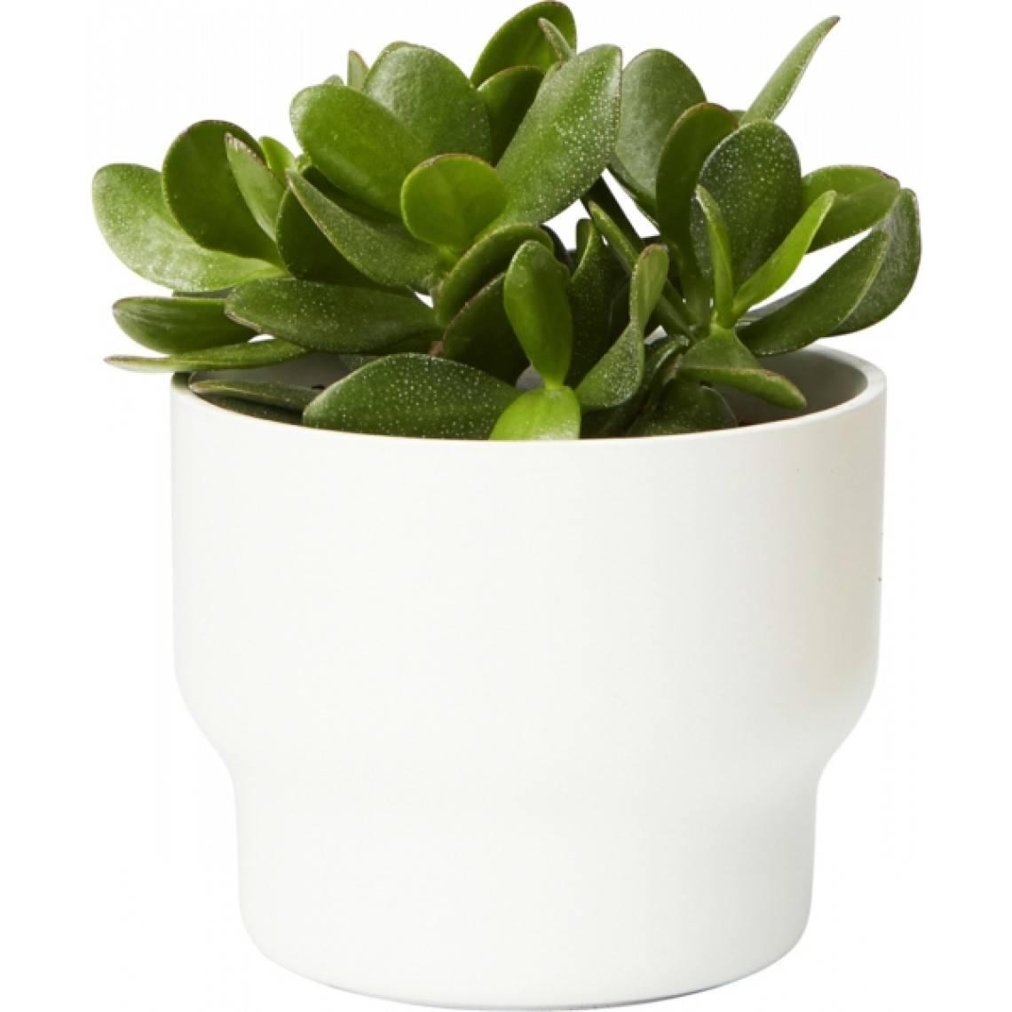 växter som förbättrar luften