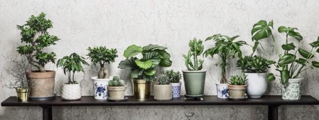gröna växter inne