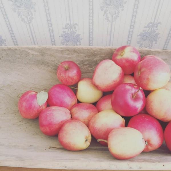 Gammeldags äppelkaka med mandelmassa och hemlagad vaniljsås.