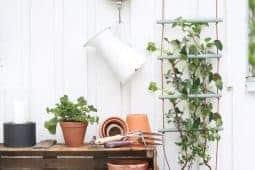 En enkel växtspaljé att göra själv av rundstav.